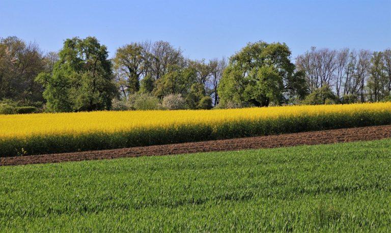 Selektywne herbicydy do ochrony roślin przed chwastami
