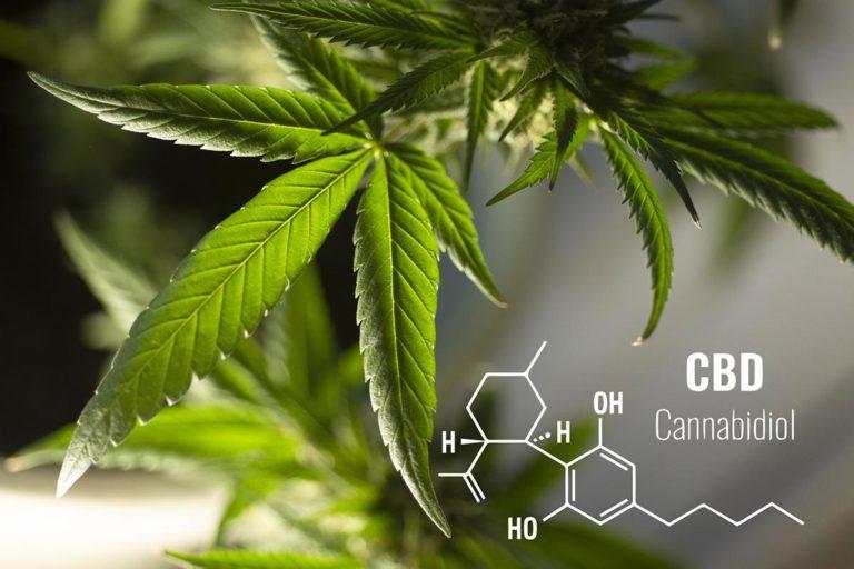 Wyhodowanie marihuany z nasion wymaga nieco wiedzy